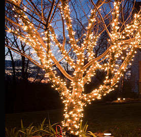 A tree illuminated with minature LED light strings